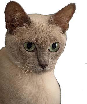 Katzen Tonkanesen