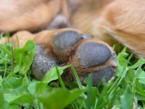 Ballenverletzungen bei Hunden