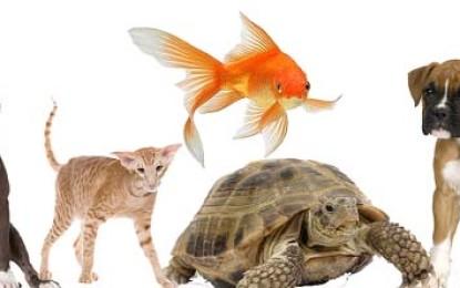 Informationen rund um das Haustier