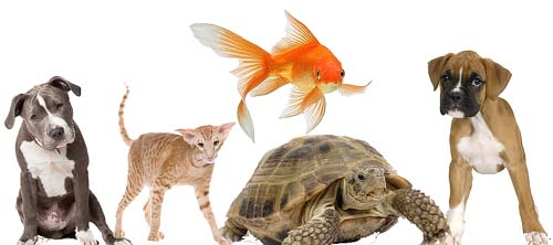 Haustiere Freunde Der Menschen Haustiere Lexikoncom