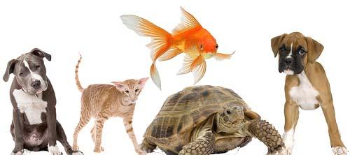 Haustiere - Freunde der Menschen - Haustiere-Lexikon.com