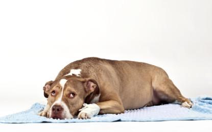 Knochenbruch, Knochenbrüche beim Hund