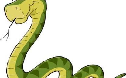 Was bei Schlangen Haltung beachten ?