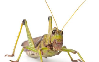 Insekten als Haustiere
