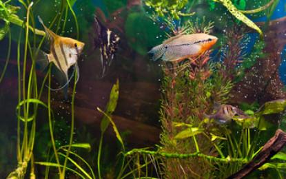 4 Tipps für Aquarien-Anfänger