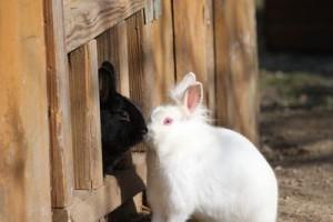 Kaninchen im Freien