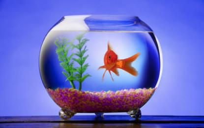 Was bei der Wahl von einem Aquarium zu beachten ist