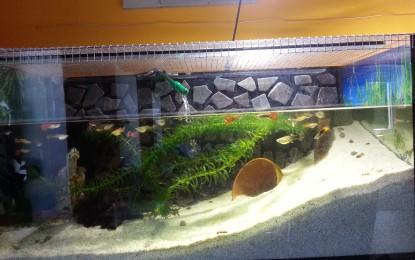 Aufstellen und Einrichten eines Aquariums