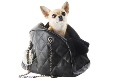 Hundetaschen, der ideale Begleiter für Reisen und Freizeit.