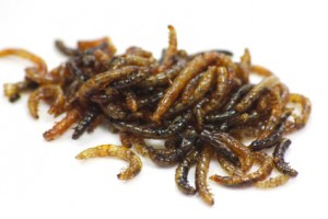 Würmer bei Haustieren