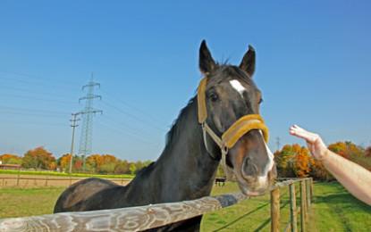 Sind Futterergänzungsmittel für Pferde notwendig ?