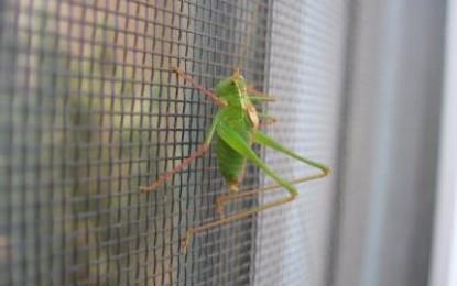 Sommerzeit ist Insektenzeit