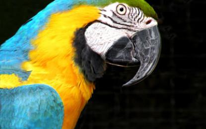 Alles über den Papagei