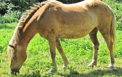 Wie viel kostet ein eigenes Pferd? (Teil 1)