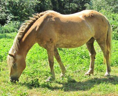 wie viel kostet ein eigenes pferd teil 1 haustiere