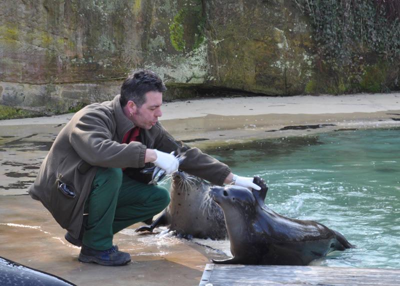 Seehundfuetterung 3