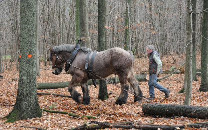 Rückepferde:  Arbeitspferde an steilen Berghängen!