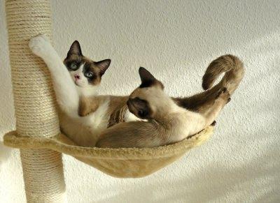 Katzen auf einem Kratzbaum