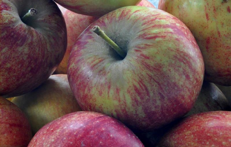 Aepfel als leckrer Snack Apfel als Gesundbrunnen