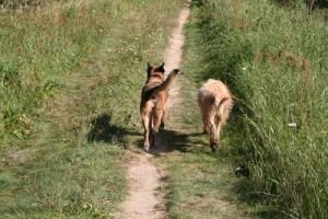 Wo ist Bello – Wenn das Haustier stiften geht