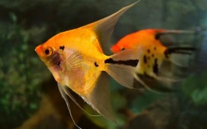 Aquaristik – Nicht nur ein Hobby für Profis