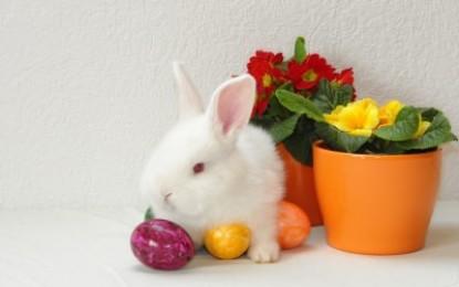 Ostern mit lebenden Tieren