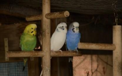 Wie mache ich den Vogelkäfig abwechslungsreicher