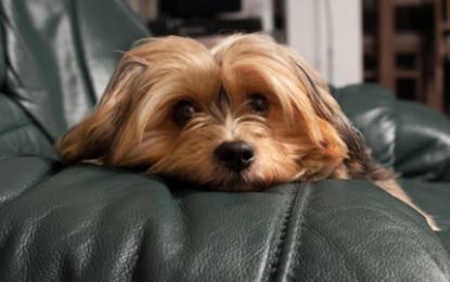 Kollege-Hund-Tag