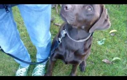 Wie bringe ich meinem Hund Fuß bei