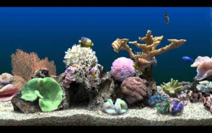 Einstieg in das Aquaristik Hobby