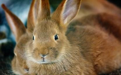 Kaninchen vergesellschaften – Anleitung