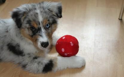 Auf den Hund gekommen: Praktische Accessoires für Ausflüge mit dem Vierbeiner