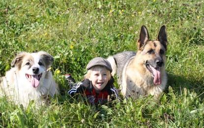 Tiere für Kinder – welches Haustier ab welchem Alter geeignet ist