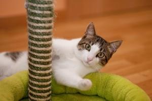 Katze zerkrazt Möbel