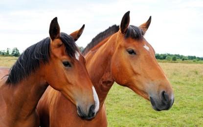 4 Fakten über Pferde, die kaum jemand weiß