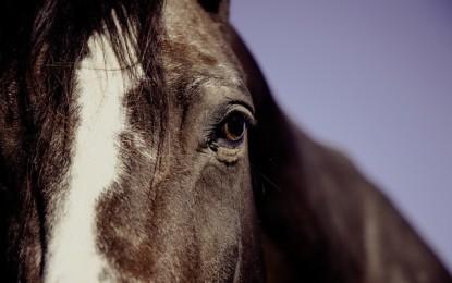 Fliegenspray für Pferde selber machen