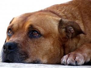 Hund erbricht Schaum
