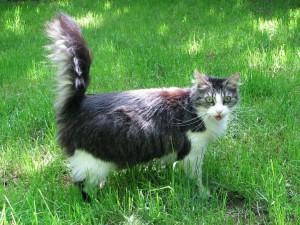 Katzen fuer Allergiker