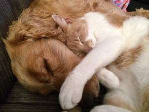 Hund und Katze zusammenfuehren