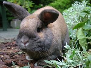 Kaninchen niest staendig