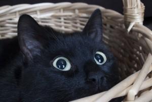 Taurin fuer Katzen