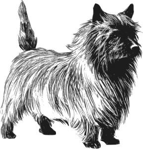 Cairn Terrier2