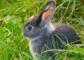 Fressen Marder Kaninchen?