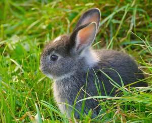 Fressen Marder Kaninchen
