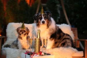 Silvester mit Hund