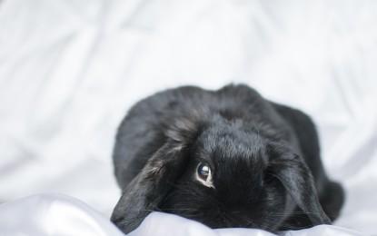 Kaninchen kastrieren lassen – wichtige Hinweise