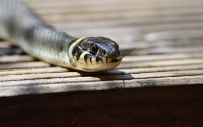 Schlange im Garten – was tun?