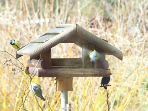 Vogelfütterung ab wann