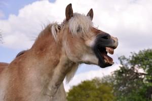 Zahnwechsel beim Pferd