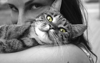 Haustiere für Allergiker – 4 Möglichkeiten